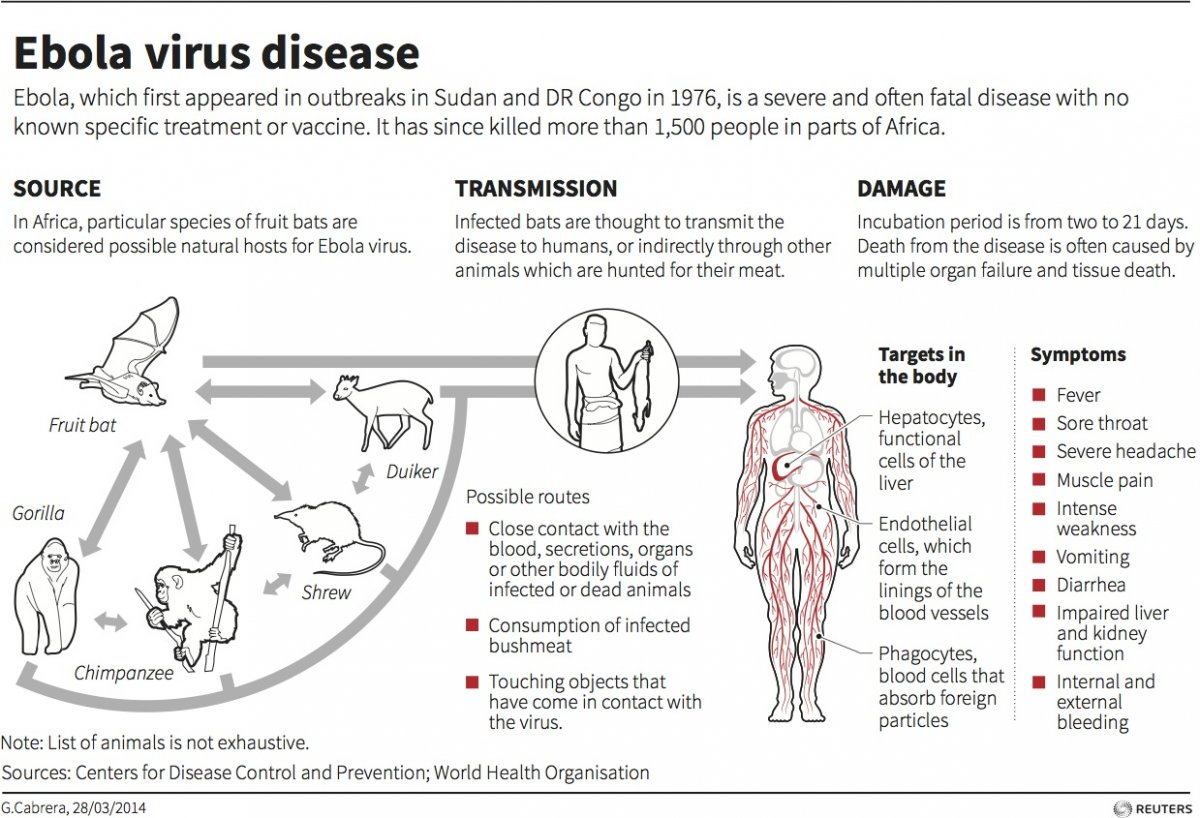 "varieties of the ebola virus But rhinovirus is by far the most  100 different varieties,  outside for prolonged periods of time in cold weather allowed you to ""catch"" the virus."